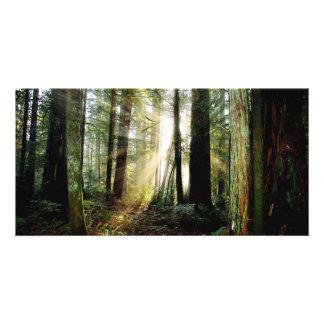 De Ochtend van de Californische sequoia Foto Wenskaarten