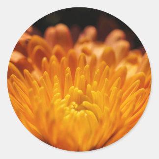 De oranje Bloem van de Chrysant om Stickers