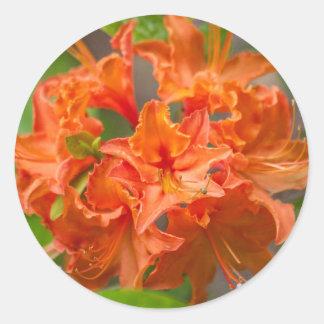 De oranje Bloemen van de Azalea Ronde Sticker