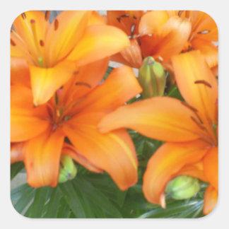De oranje Bloemen van de Lelie Vierkant Sticker