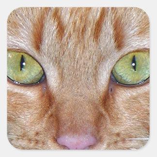 De oranje Ogen van de Kat Vierkante Stickers