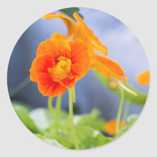 De oranje Stickers van de Foto van de Oostindische