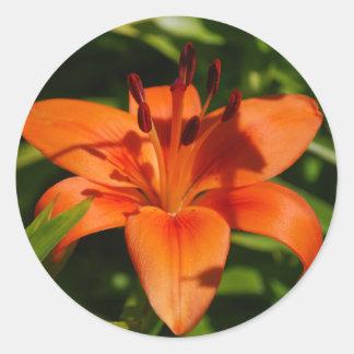 De oranje Stickers van de Lelie