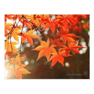 De rode bladeren van de Esdoorn van de Herfst Briefkaart