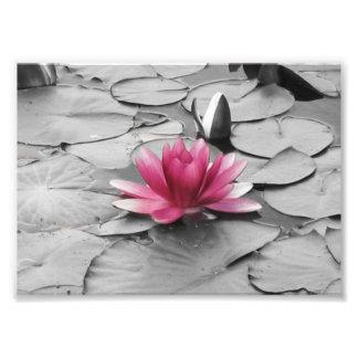 De roze bloem van het leliestootkussen foto afdruk