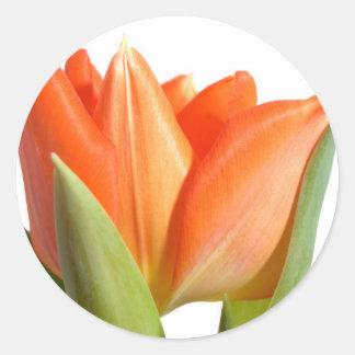 De Stickers van de tulp