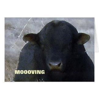 De Stier van de Stier - Westerne Adreswijziging Kaart