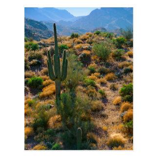 De V.S., Arizona. Het Uitzicht van de woestijn Briefkaart