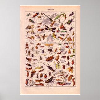 De vintage historische Insecten   van 1920 Poster