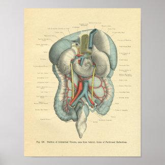 De vintage Organen van de Darmen van de Anatomie Poster