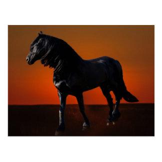 Des gambades de coucher du soleil de chevaux carte postale