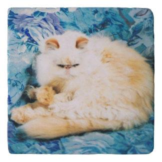 Dessous-de-plat Trépied avec le chat persan