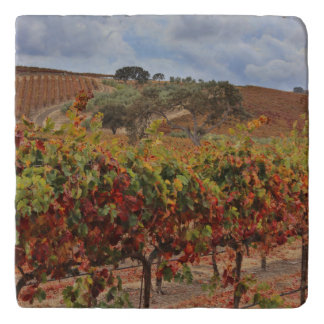 Dessous-de-plat Trépied toscan de cuisine de beau vignoble