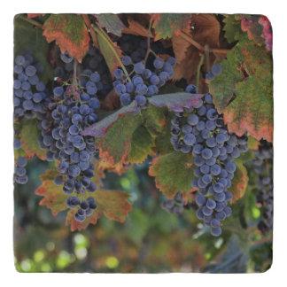 Dessous-de-plat Trépied toscan de vignoble de décor de pays de vin