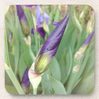 Dessous-de-verre Bourgeon pourpre d'iris germanique