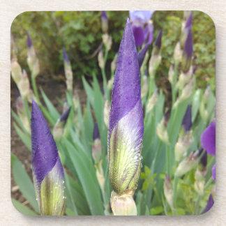 Dessous-de-verre Bourgeons pourpres d'iris germanique