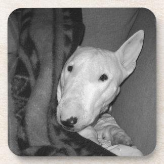 Dessous-de-verre Bull-terrier anglais blotti sous une couverture -