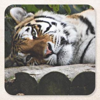 Dessous-de-verre Carré En Papier Tigre fixant vous observant