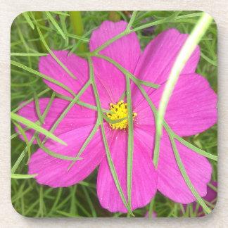 Dessous-de-verre Dissimulation rose de fleur de cosmos