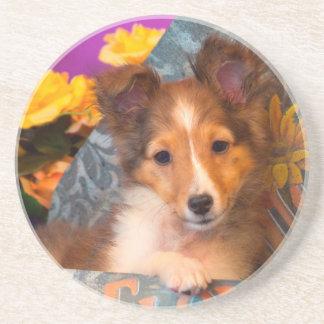 Dessous De Verre En Grès Chiot de chien de berger de Shetland dans une
