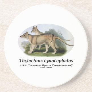 Dessous De Verre En Grès Cynocephalus de Thylacinus (tigre ou loup