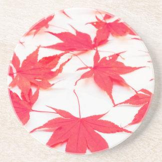 Dessous De Verre En Grès Feuille rouge d'Acer sur l'arrière - plan blanc