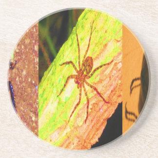 Dessous De Verre En Grès Le Costa Rica sauvage - araignées, cancrelats et