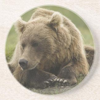 Dessous De Verre En Grès Ours de Brown, ou ours gris côtier, Ursus