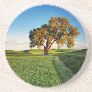 Dessous De Verre En Grès Un arbre solitaire entouré par Rolling Hills de