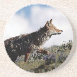 Dessous De Verre En Grès Un coyote marche en parc national de Yellowstone,