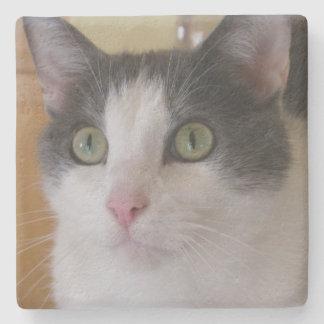 Dessous-de-verre En Pierre Chat gris et blanc mignon