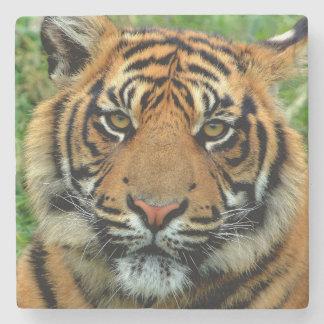 Dessous-de-verre En Pierre Dessous de verre en pierre de tigre
