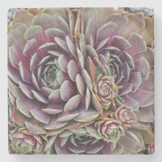 Dessous-de-verre En Pierre Poules et plante de cactus de poussins