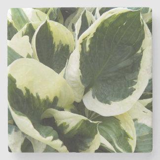 Dessous-de-verre En Pierre Usine de Hosta florale