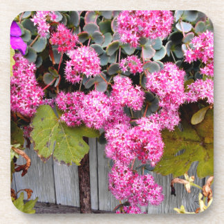 Dessous-de-verre Fleurs roses d'orpin de falaise