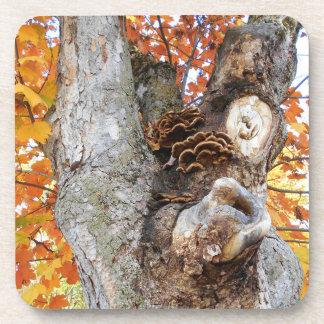 Dessous-de-verre Le vieil arbre