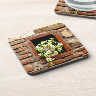 Dessous-de-verre Plante dans le mur
