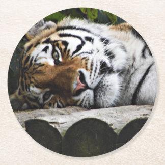 Dessous-de-verre Rond En Papier Tigre fixant vous observant