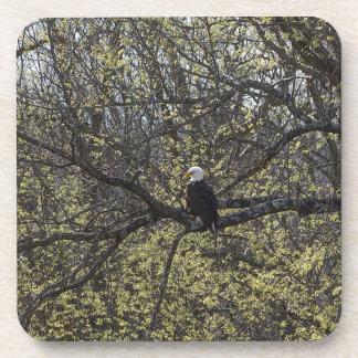 Dessous-de-verre Surveillance d'Eagle Painterly