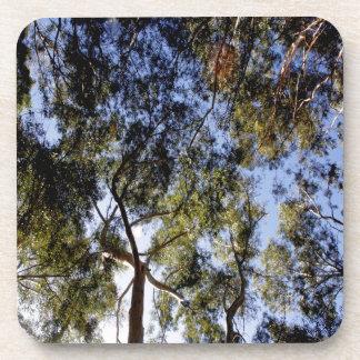 Dessous-de-verre Voûte d'eucalyptus