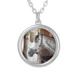 Destin - asile de cheval collier