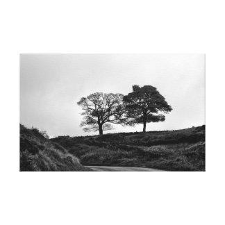 Deux arbres en noir et blanc toiles
