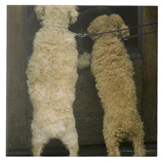 Deux chiens regardant dans la fenêtre de porte, vu carreau en céramique