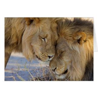 Deux lions se frottant carte de vœux