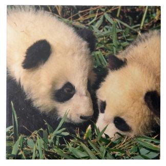 Deux petits animaux de panda dans le buisson en ba grand carreau carré