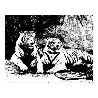 Deux tigres en noir et blanc carte postale