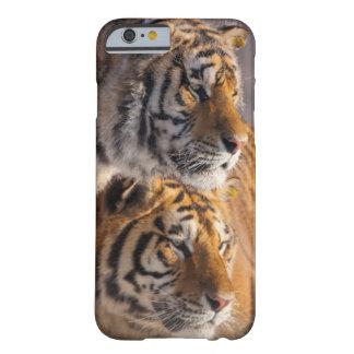 Deux tigres sibériens ensemble, la Chine Coque Barely There iPhone 6