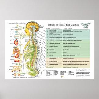 Diagramme d'american national standard de nerfs poster
