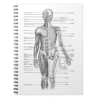 Diagramme humain d'anatomie carnets