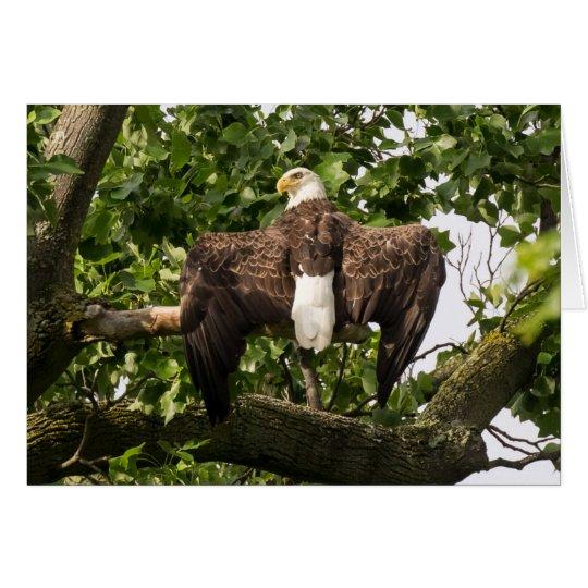 Diffusion Eagle Carte